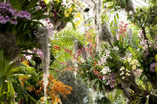 Orchid Show At Ny Botantical Gardens Amy Hirschamy Hirsch