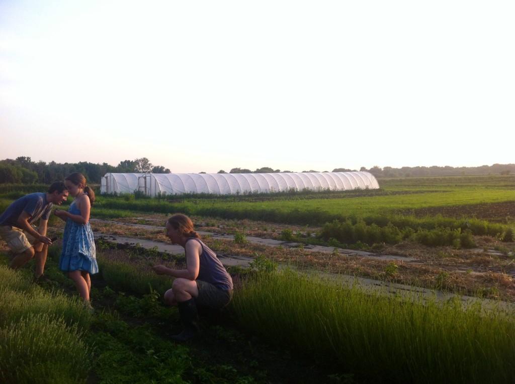 Blue Hill Farm 5
