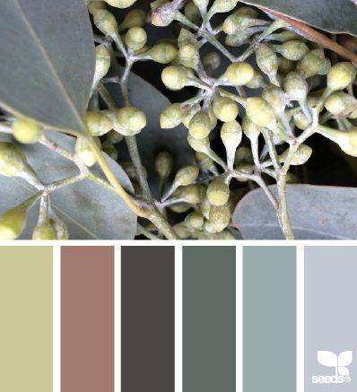 Design Seeds 12